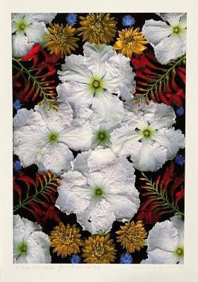 Portia Munson, Flower Mandala: Gourd Flower